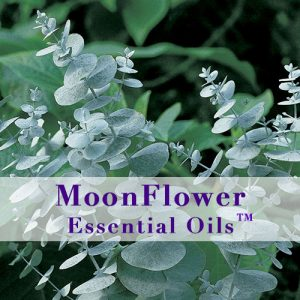 moonflower essential oils allergy ease image