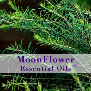 moonflower essential oils anti bacterial image