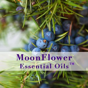 moonflower essential oils anti cellulite