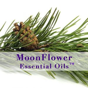 moonflower essential oils anti viral image
