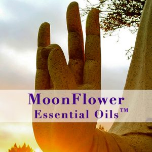 moonflower essential oils circulatory balance image