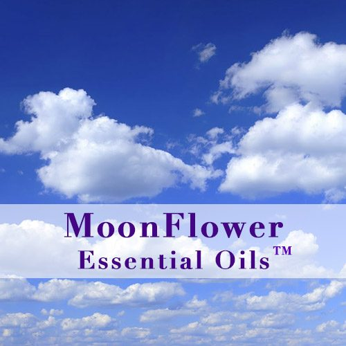 moonflower essential oils clean air anti viral image