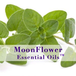 moonflower essential oils cough calm image