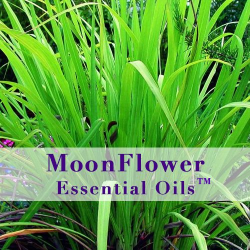 moonflower essential oils dry to normal skin image