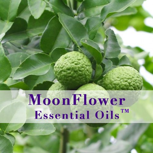 moonflower essential oils fungal clear plus image
