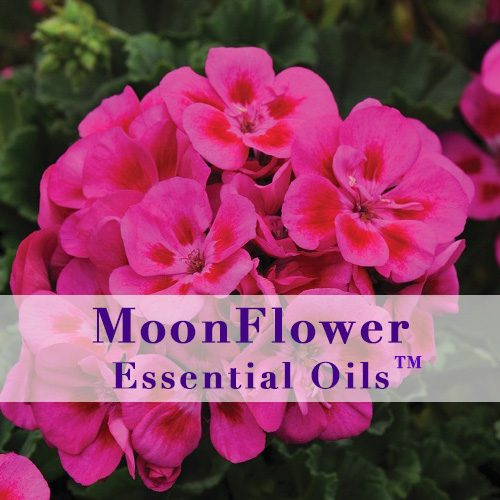 moonflower essential oils hair and scalp clear image