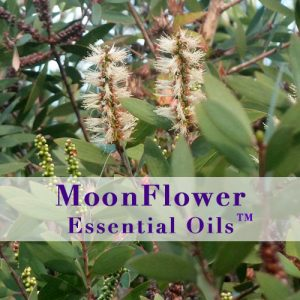 moonflower essential oils immune boost image