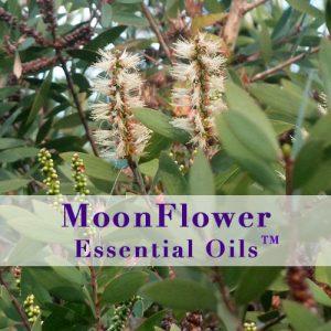moonflower essential oils immune boost image