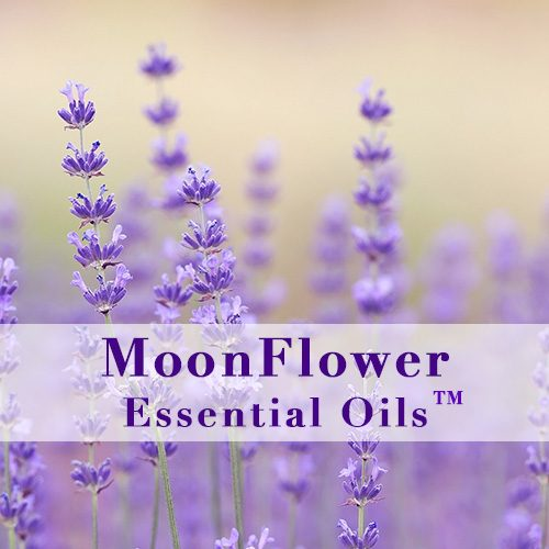 moonflower essential oils itch ease image