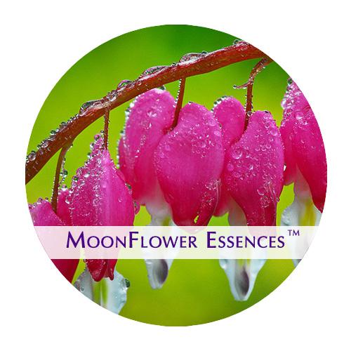 moonflower essences bleeding heart flower image
