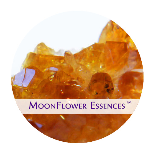moonflower essence - citrine gemstone image