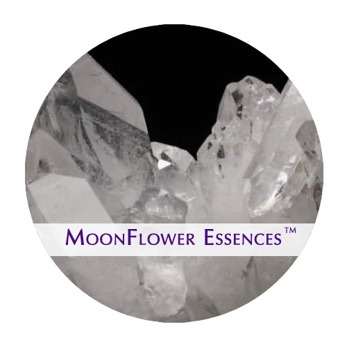 moonflower essence - clear quartz image