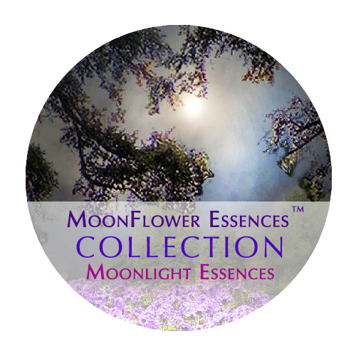 moonflower essences collection - moonlight essences image