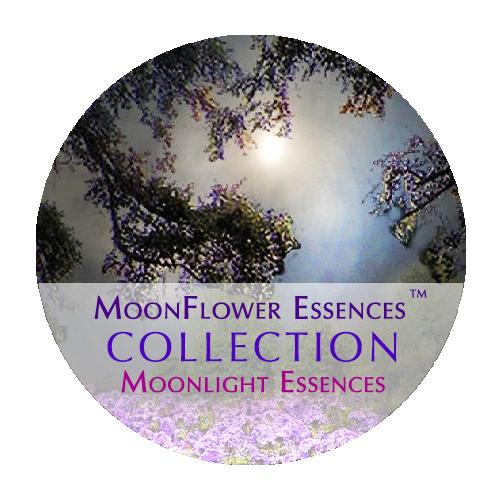 moonflower essences collection - moonlight essences image