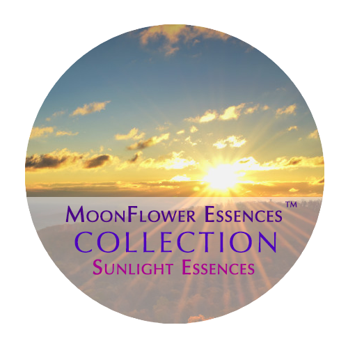 moonflower essences collection - sunlight essences image