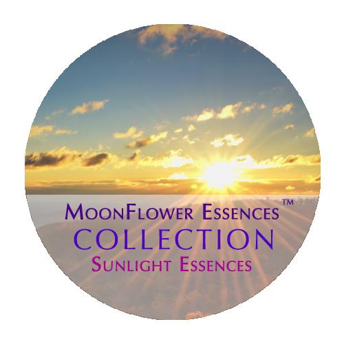 moonflower essences collection - sunlight essences image