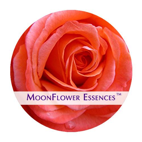 moonflower essences coral rose image