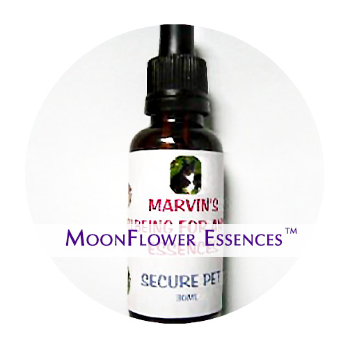 moonflower essences - secure pet image