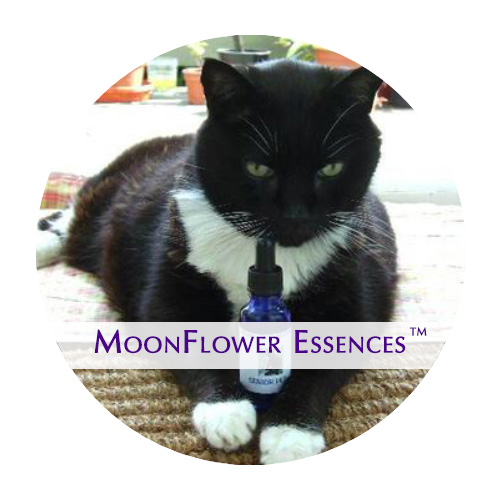 moonflower essences - senior pet image