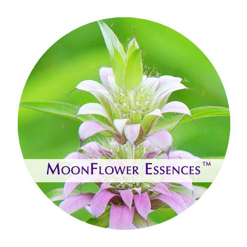 moonflower essence - mint image