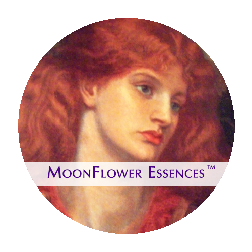moonflower essences - enchantress image