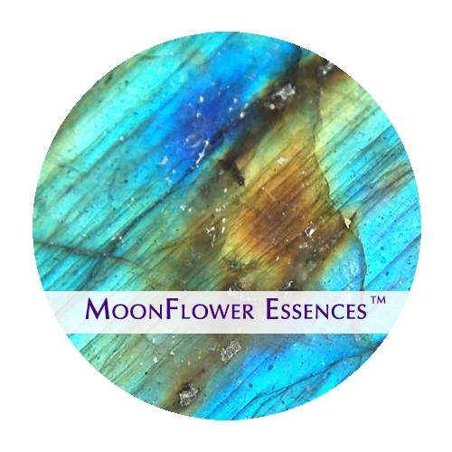 moonflower essences - labradorite image