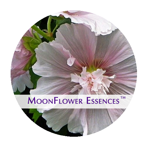 moonflower essences - pink holyhock image