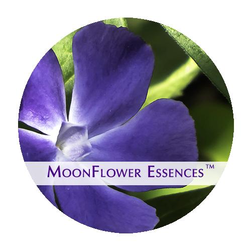 moonflower essences - periwinkle image