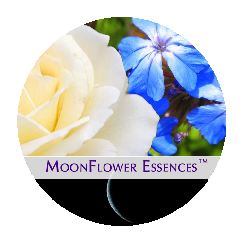 moonflower moon combination essences - new moon image