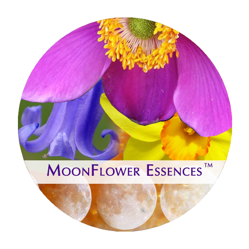 moonflower moon combination essences - bud moon image
