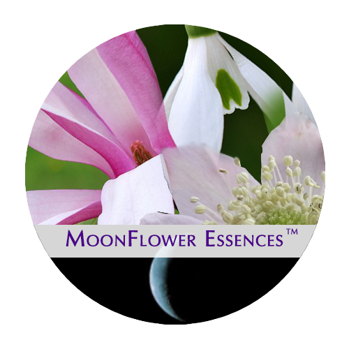 moonflower moon combination essences - crescent moon image