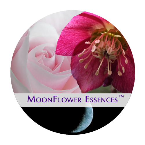 moonflower moon combination essences - dark moon