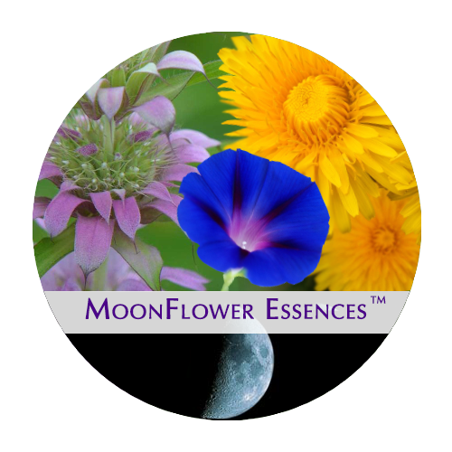 moonflower moon combination essences - growth moon image