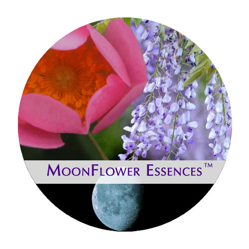 moonflower moon combination essences - harvest moon