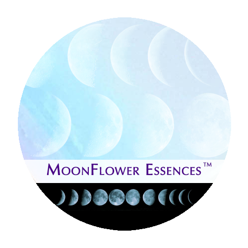 moonflower moon combination essences - set of 8 essences image