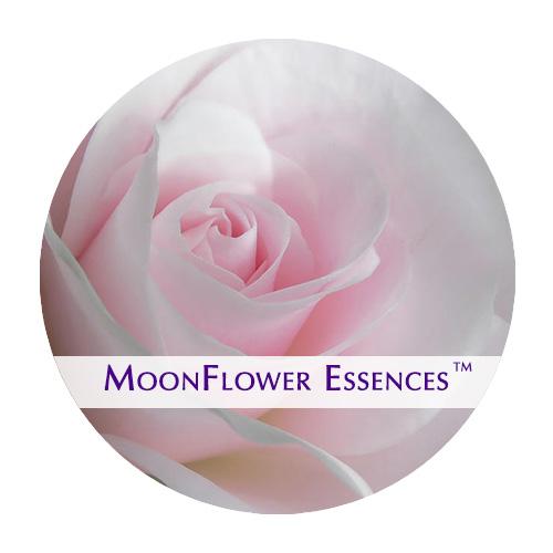 moonflower essence - pale pink rose image