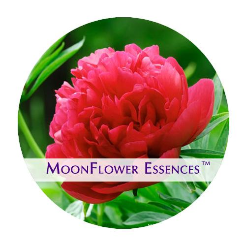 moonflower essence - red peony image