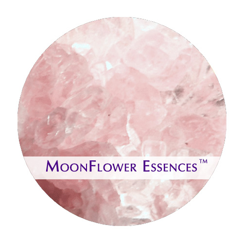 moonflower essence - rose quartz