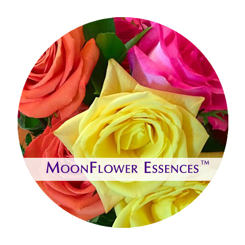 moonflower essence - five roses image
