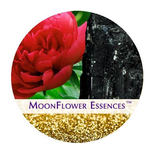moonflower essences collection - sacred money archetypes - alchemist
