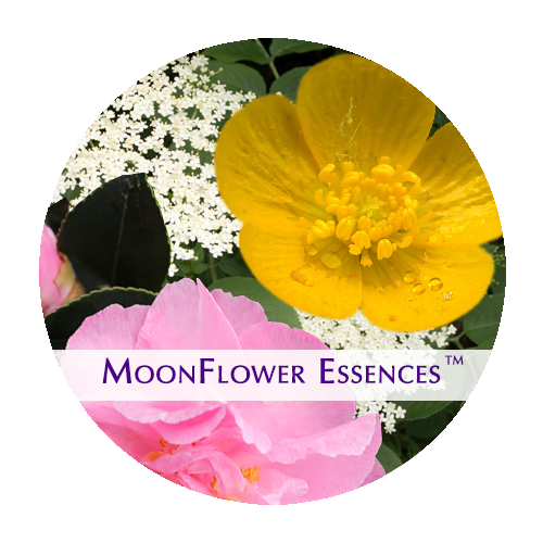 moonflower essences collection - sacred money archetype: celebrity