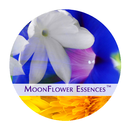 moonflower essences collection - sacred money archetype - maverick
