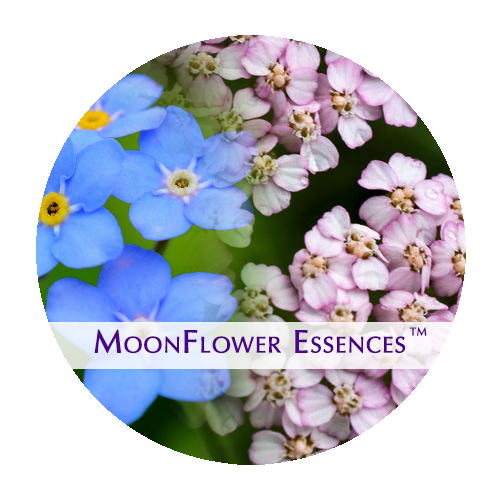 moonflower essences collection - sacred money archetype - nurturer