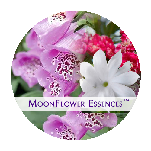 moonflower essences collection - sacred money archetype - romantic
