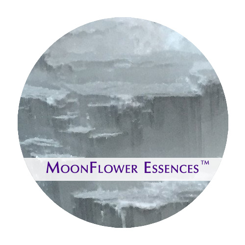 moonflower essence - selenite image