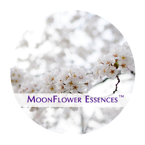 moonflower essence - cherry blossom image