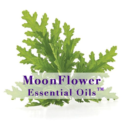 moonflower essential oils no more bugs image