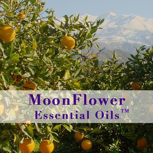 moonflower essential oils oily skin image