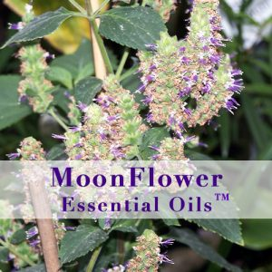 moonflower essential oils skin calm image