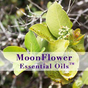 moonflower essential oils skin smooth image